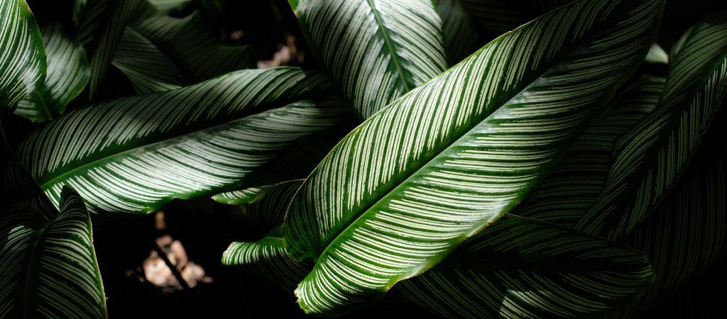 Plantes Tropical. Agence Web Genève Lausanne. Antistatique